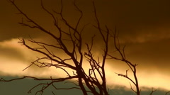 Dry Branch & Clouds HD Stock Footage