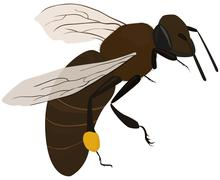 bee in fly - stock illustration