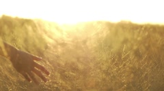 woman's hand passing through a field of yellowed grass at sunset - stock footage