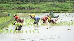 Group of farmer working hard on rice field Stock Footage