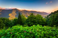 flowers and view of the blue ridge at sunrise, seen from mt. mitchell overloo - stock photo