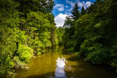 the little river, in dupont state forest, north carolina. - stock photo