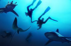 Divers holding hands, north -seymour-island, galapagos, ecuador, pacific ocea Stock Photos