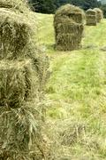 stapled hay bales on a hayfield - stock photo
