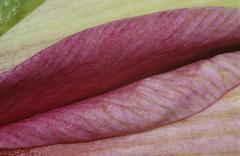 Detail of a n amaryllis Stock Photos