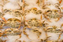 dungeness crabs on ice, pike place market, seattle, washington, usa - stock photo