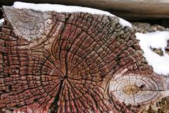 Head of an old weathered wooden beam with perceptible tree-rings and knots Stock Photos