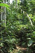 Stock Photo of in the tropical rain forest amazonia brazil