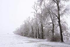 trees at a field\'s edge in winter - stock photo