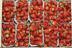 freshly picked organically-grown strawberries in baskets - stock photo