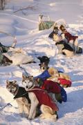 Sled dogs wearing jackets, resting, yukon quest trail, yukon territory, canad Stock Photos