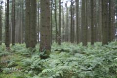 European garden spider (araneus diadematus) in web between fir trunks (picea  Stock Photos