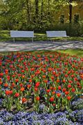Stock Photo of tulips at doblhoff park, baden, lower austria, austria, europe