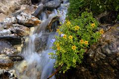 Mountain stream, kemater alm alpine pasture, tirol, austria, europe Stock Photos