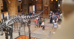 Visitors around Diplodocus, plant eating dinosaur 4K - stock footage
