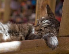Sleeping cat, san pedro de atacama, región de antofagasta, chile, south amer Stock Photos