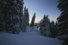 deeply snowed firs, ski slopes sellamatt - wildhaus, toggenburg, st. gall, sw - stock photo