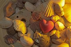 Red stone heart surrounded from different seashells *** important: non exclus Stock Photos