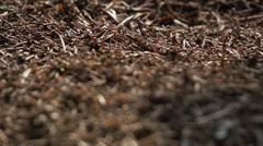 Forest anthill in close up in slow motion Stock Footage