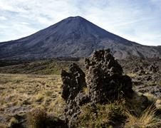 tussock grass (chionochloa rubra) and lava rock with mt. ngauruhoe in the bac - stock photo