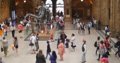 Visitor numbers increase at Natural History museum 4K Stock Footage