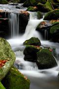 Kleine ohe mountain stream and autumn leaves, bayerischer wald (bavarian fore Stock Photos