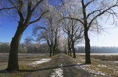 """tree-lined road to a small lake called """"stempflessee"""" with hoar frost, augsbu - stock photo"""