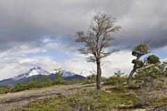 view of the mountain landscape surrounding cueva del milodón natural monumen - stock photo