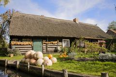 Stock Photo of pumpkins, corn and onions in front of a spreewald forest home, brandenburg, g