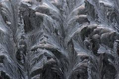 Tracery on a frosted window pane of a car - frost patterns Stock Photos
