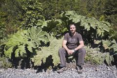 Man under a big Pangue plant, Carretera Austral, Patagonia, Chile, South America - stock photo