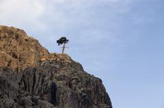 Solitary corsican pine pinus nigra laricio in the golo valley, corsica, franc Stock Photos