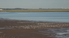 birds on the beach, river dee estuary at caldy, wirral, england - stock footage
