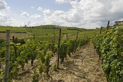 near vinchio province asti langhe piedmont piemonte italy - stock photo