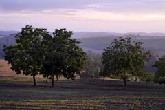 evening at portacomaro near asti monferrato piedmont piemonte italy - stock photo