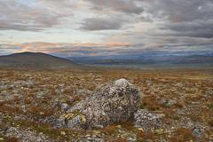 fjell landscape in evening light, dovre-sunndalsfjella national park, norway, - stock photo