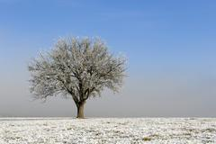 Stock Photo of tree and meadow with hoar frost