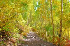 Autumn foliage - Aspen leaves and fall colors in the mountains - stock photo
