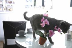 Stock Photo of cat on a set table