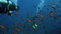 Scuba divers watching thousands of tropical fish swimming on coral reef Stock Footage