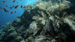 Magical coral reef alive with shoals of fish - stock footage