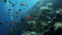 Magical coral reef alive with shoals of fish Stock Footage