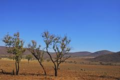 Veld landscape pilanesberg national park, province north-west, south africa Stock Photos