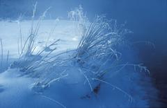 Stock Photo of winter morning grass with hoarfrost upper bavaria germany