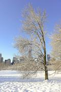 Lone Bare Tree in the Park in the snow, Manhattan , New York City - stock photo