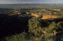 view of the colorado valley, mcinnis canyons national conservation area, gran - stock photo