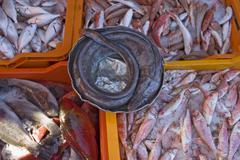fish market in tripoli - stock photo