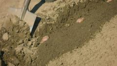 Planting potatoes in a small field. bury tubers with a spade Stock Footage