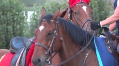 Bred Horse Race Derby - 26 - stock footage
