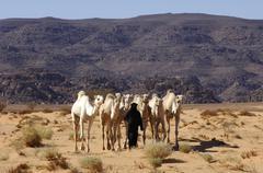 Tuareg with dromedaries acacus mountains libya Stock Photos